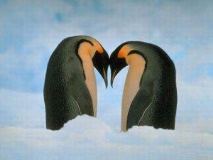 20080224-amor-pinguinos